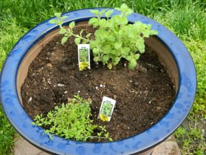 This is a trial and error pot.  There may be too much spreading of these plants for the pot.