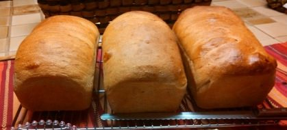 Baked loaves of Honey Whole Wheat Bread