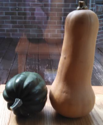 Acorn and Butternut Squash